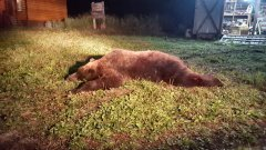 bear12.jpeg