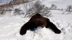 bear6.jpeg